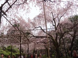 平安神宮の神苑4