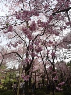 平安神宮の神苑5