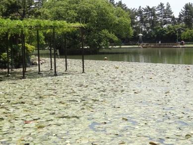 天王川公園2