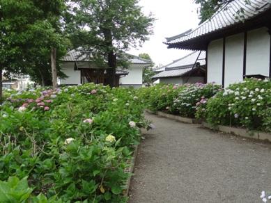 琴聲山音楽寺2