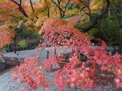 曽木公園4