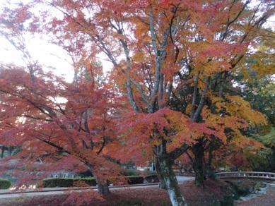 曽木公園6