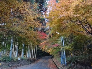 曽木公園7