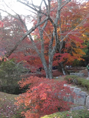 曽木公園3