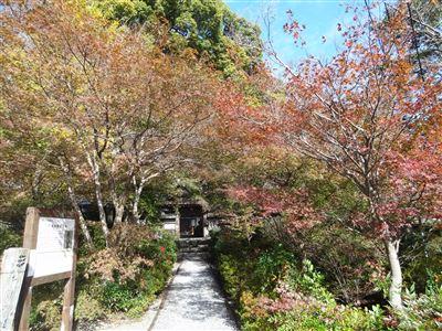 円興寺の紅葉5