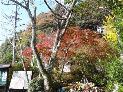 円興寺の紅葉6