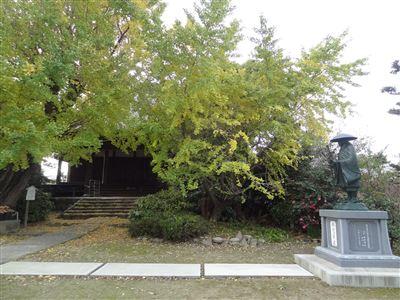 祖父江町の銀杏9