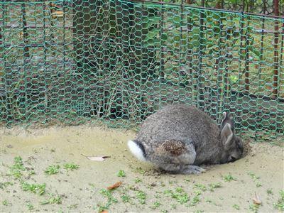 岡崎市東動物園 うさぎ