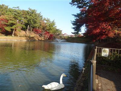 岡崎市東公園白鳥1