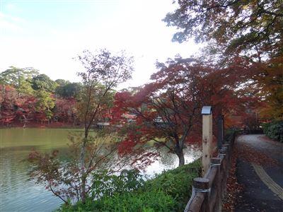 岡崎市東公園紅葉2
