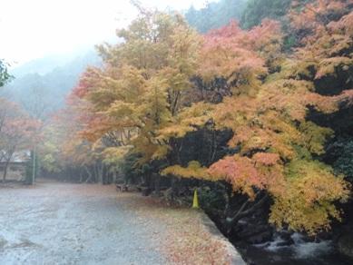 愛知県 くらがり渓谷キャンプ場 の写真g598
