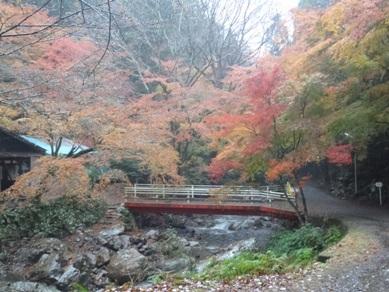 愛知県 くらがり渓谷キャンプ場 の写真g597