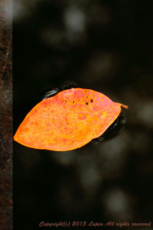 2013-11-4(2).jpg