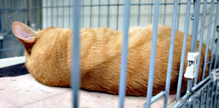 cat121_20120411172016.jpg