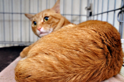 cat122.jpg