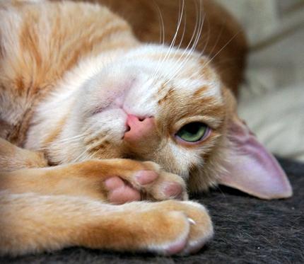 cat125.jpg