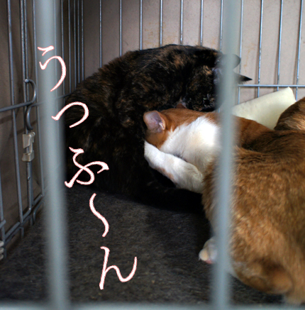 cat126.jpg