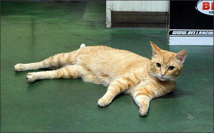 cat128_20120902010836.jpg