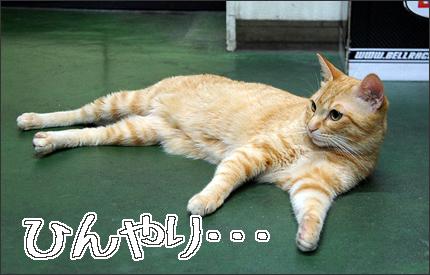 cat129.jpg