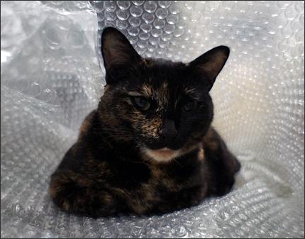 cat130.jpg
