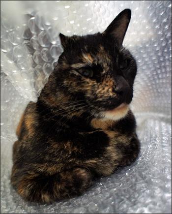 cat131.jpg