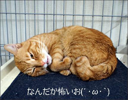 cat131_20120918214003.jpg
