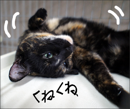 cat135.jpg
