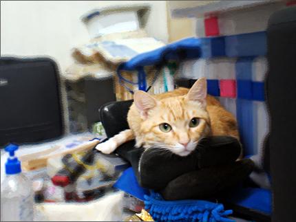 cat136.jpg