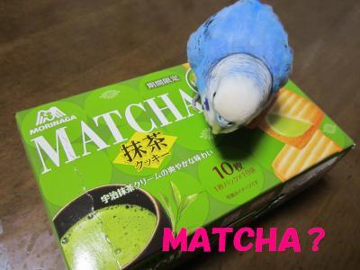 MATCHA?