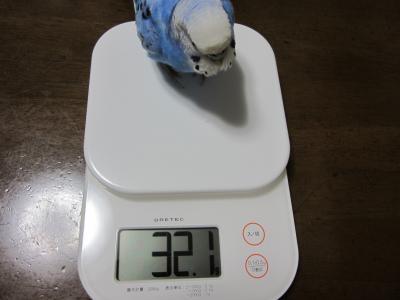 32.1㌘