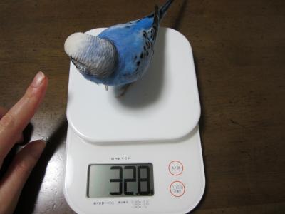 32.8㌘