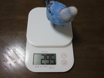 29.5㌘