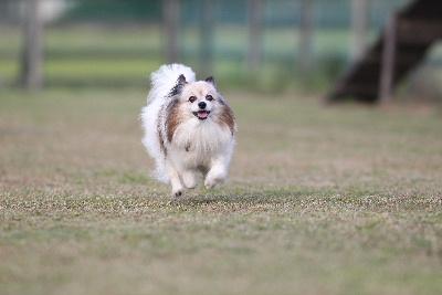 飛行犬16