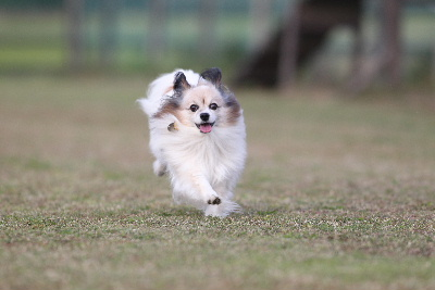 飛行犬17