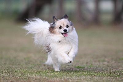 飛行犬21