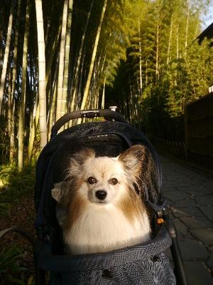 2014伊豆旅行5−16