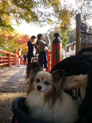 2014伊豆旅行5−14
