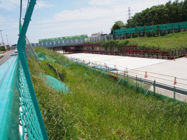 緑地復旧工事はいつ頃から始まるのかな?