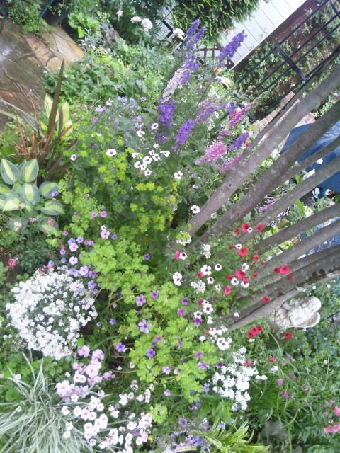 多年草の庭3