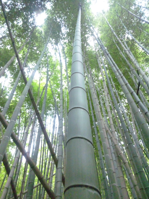 竹をえらぶ