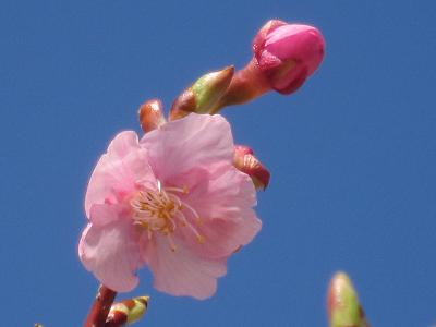 IMG_0459 ⑩ 一番花つけた