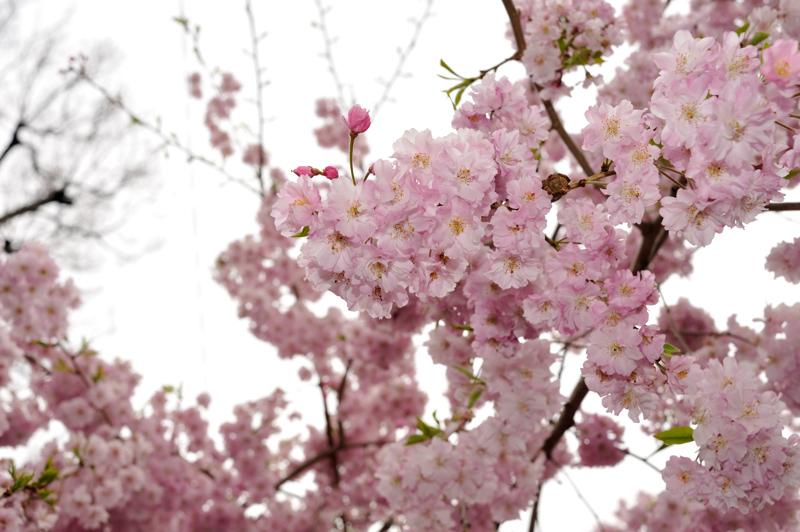 2012桜9