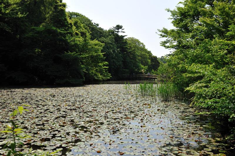 石神井公園4