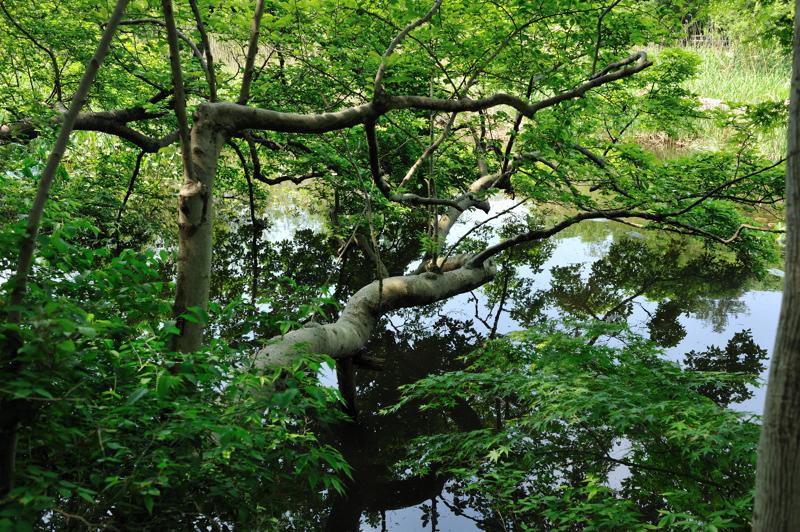 石神井公園9