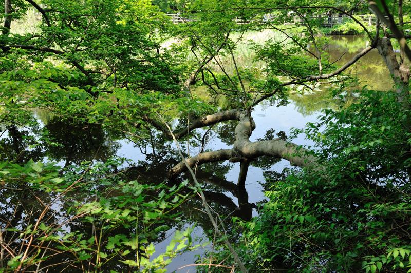 石神井公園8