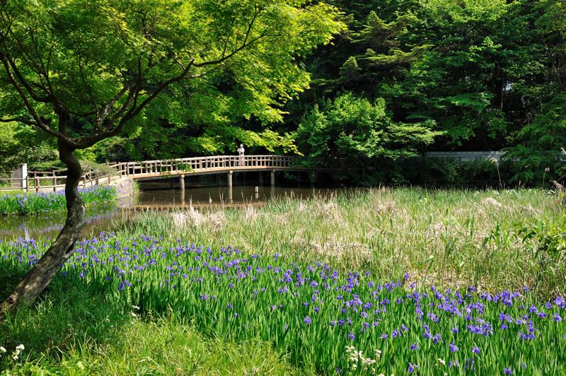 石神井公園12