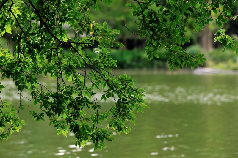 井の頭公園緑