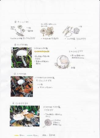 120704kinoko1.jpg