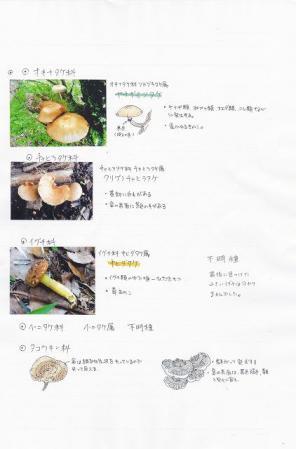120704kinoko2.jpg