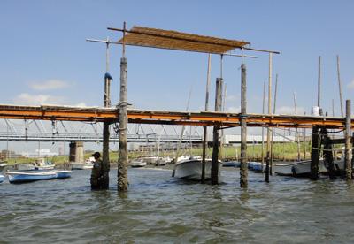 江戸川放水路